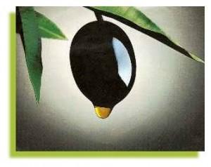 ثمرة الزيتون: وقاية و علاج